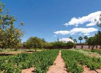 taller de hierbas ibicencas en Fluxà Ibiza